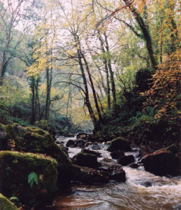 Kilton beck valley upstream